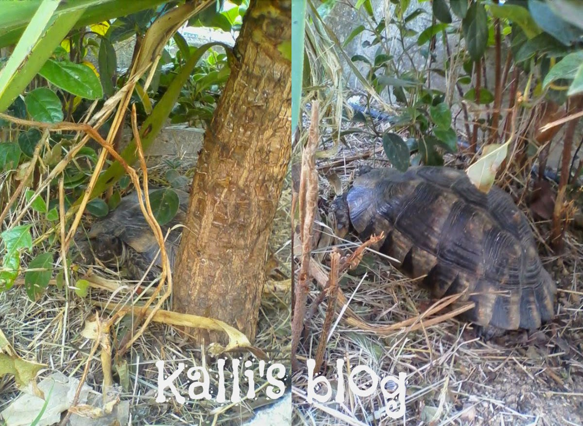 Turtle rescue! ANIMA (Σύλλογος Προστασίας και Περίθαλψης Άγριας Ζωής)