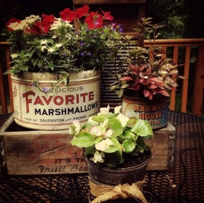 Kaleng biskuit tidak banyak yang perlu dilakukan untuk mengubahnya jadi pot tanaman.