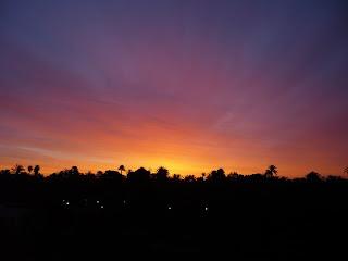 Sunrise in Elche Palm Grove