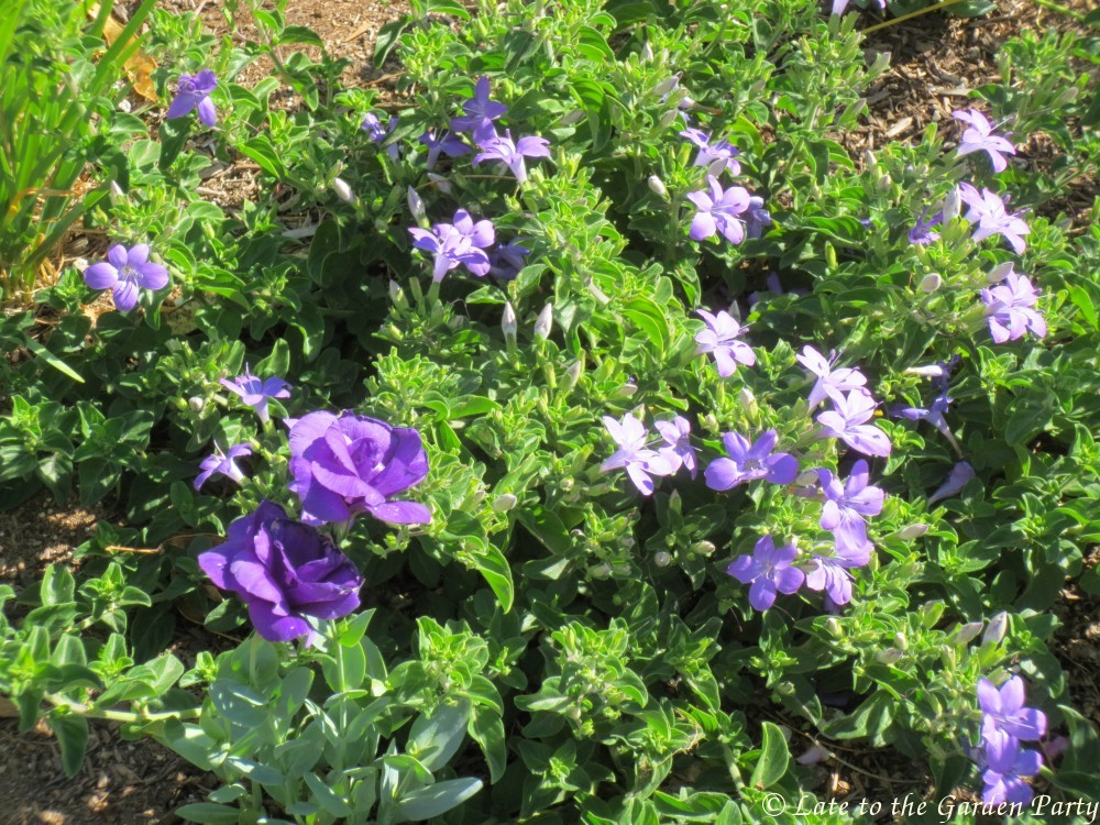 Late to the garden party my favorite plants this month for Plants for sale