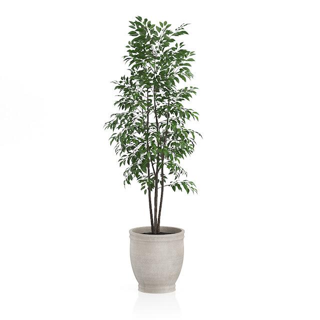 3D model free -  Plants_30
