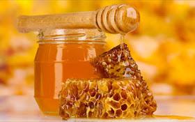 Προγραμματισμός Project Εαρινού εξαμήνου του Τμήματος Μελισσοκομίας του ΔΙΕΚ Επιδαύρου