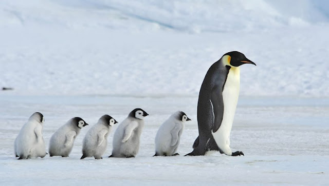 افضل خمسة (5) آباء اكثر من رائعين في مملكة الحيوان
