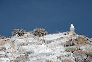 nesting birds on the heights of Mendarte Island