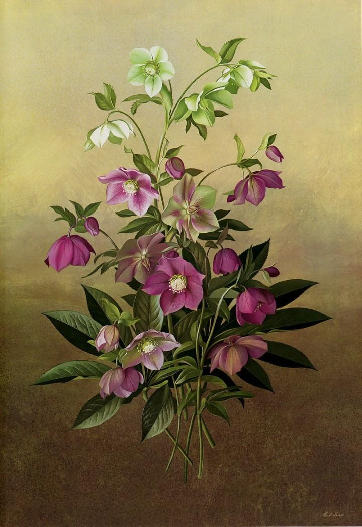 Paul Jones. Акварельные рисунки цветов 29