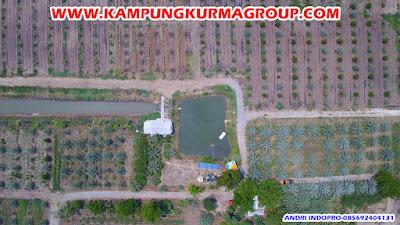 kampoeng-kurma-jonggol-ke-kebun-kurma-thailand
