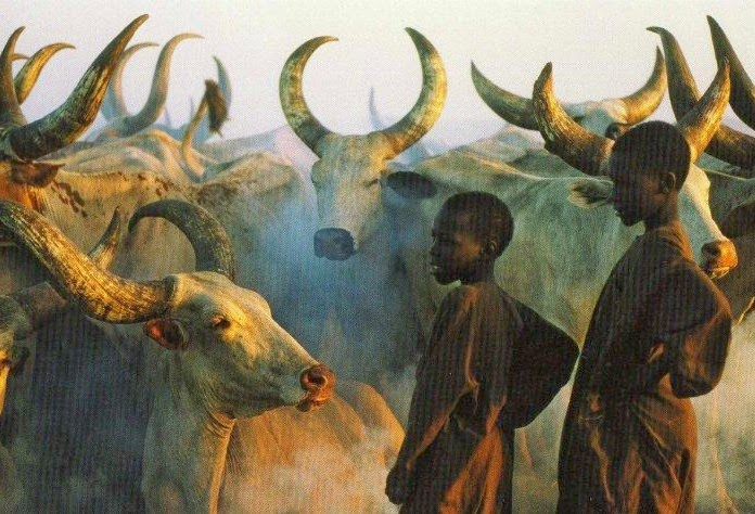 Ancient African cattle first domesticated in Middle East