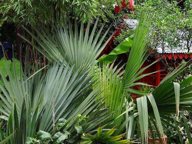 (07) Le jardin de Bésignoles - Privas - Page 2 DSC08151