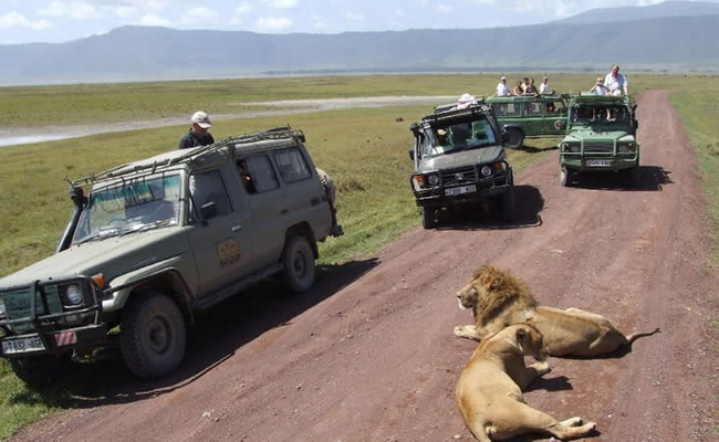www.xvlor.com Ngorongoro Conservation Area is beauty of crater highlands wildlife