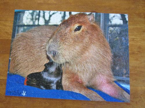 jigsaw puzzle of a capybara