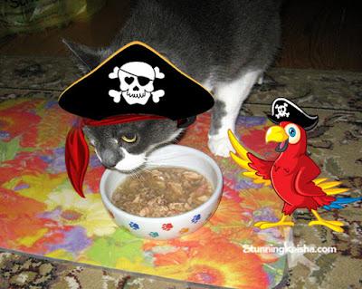 E'en Pirates Live th' Wellness Life #ChewyInfluencer