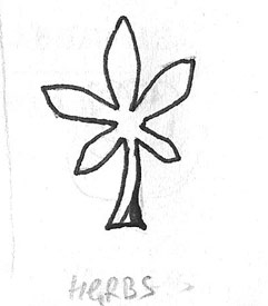 Herb Raw Drawing