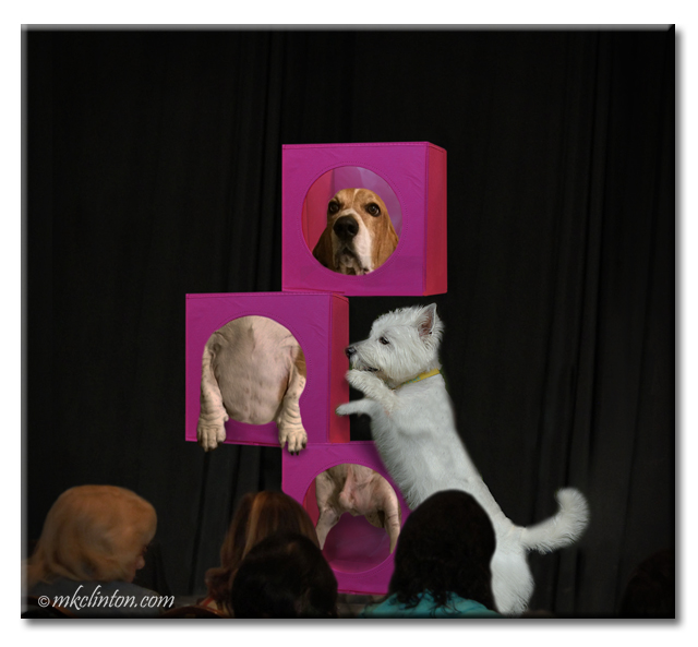 Two dogs performing a magic trick