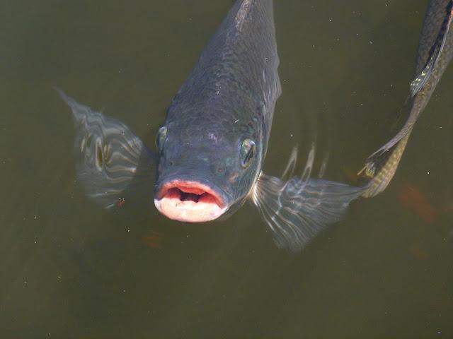 http://www.worldfishcenter.org/