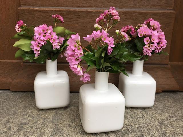Drei weisse Vasen mit pinken Wachsblumen und Bergenien