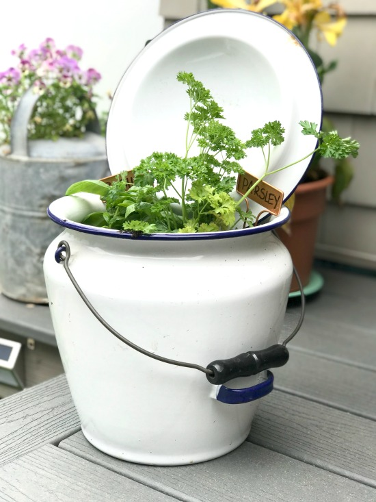 Using a Repurposed Enamelware pot as an Herb Garden