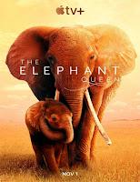 pelicula Reina de elefantes (2019)