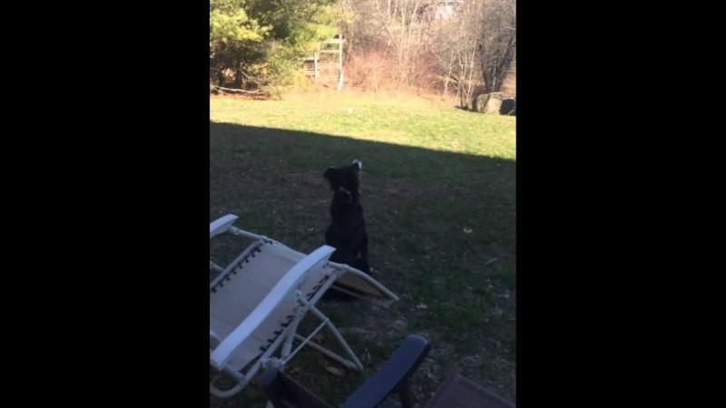 Ο σκύλος που νομίζει πως το φεγγάρι είναι το μπαλάκι του! (βίντεο)