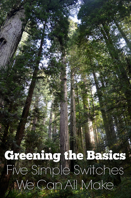 redwood trees green basics