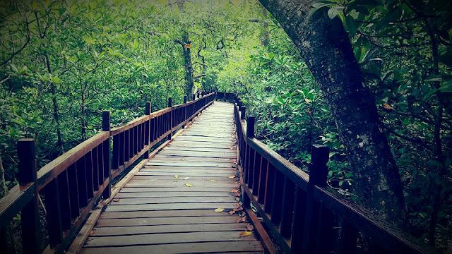 Lokasi Taman Wisata Hutan Mangrove Sukadana