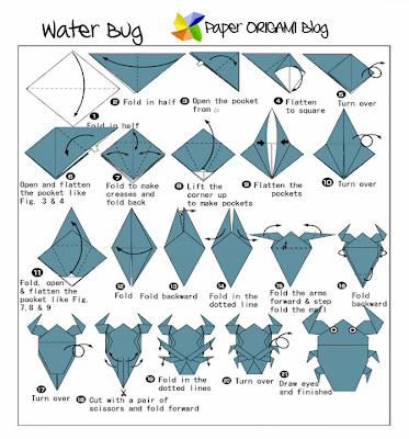 Water bug Diagram