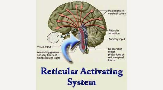 Reticular Activating System Diagram Circuit Diagram Symbols