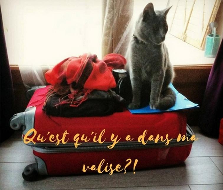 Qu'est qu'il y a dans ma valise?!
