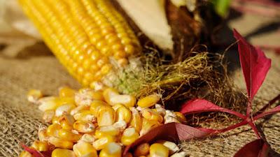 Come produrre più cibo: batteri associati a radici