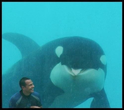 DIVERTIDA IMAGEN DE BALLENA ORCA