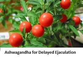 Ashwagandha for Delayed Ejaculation