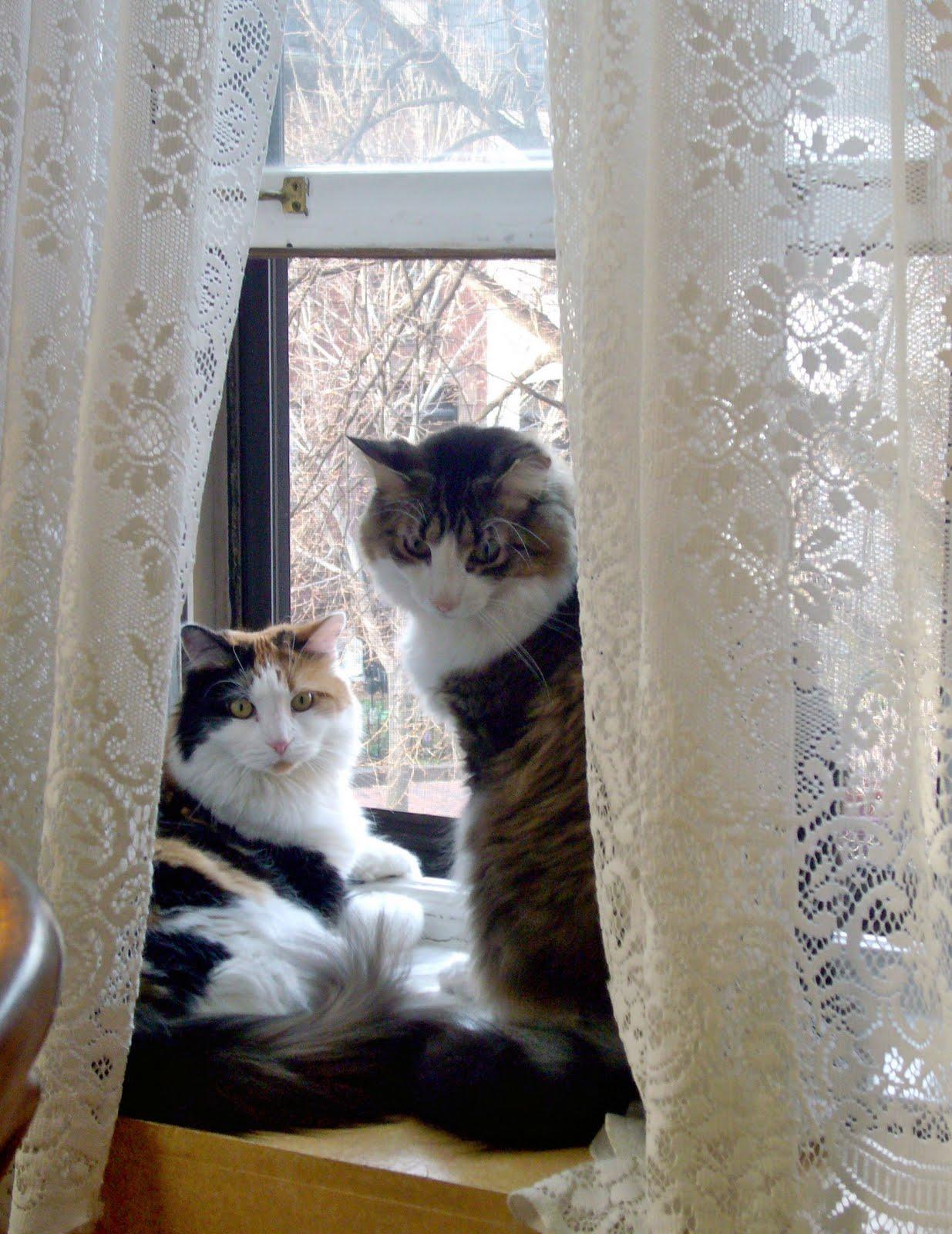 A Proper Bostonian: Cats In Windows