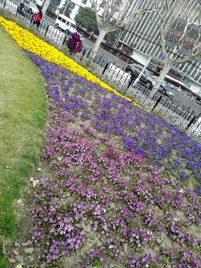 春の花壇…黄色、青、紫の花々