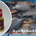 Racikan Umpan Ikan Bawal Harian Mudah Paling Galak!