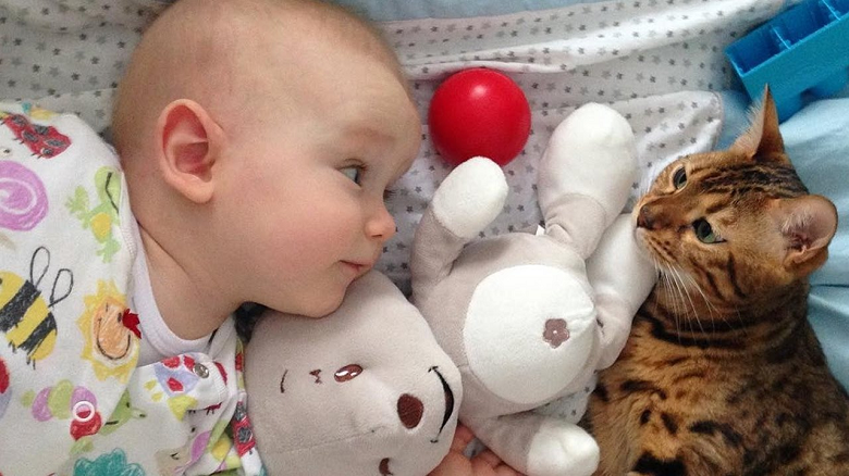 Facts about cats and Babies