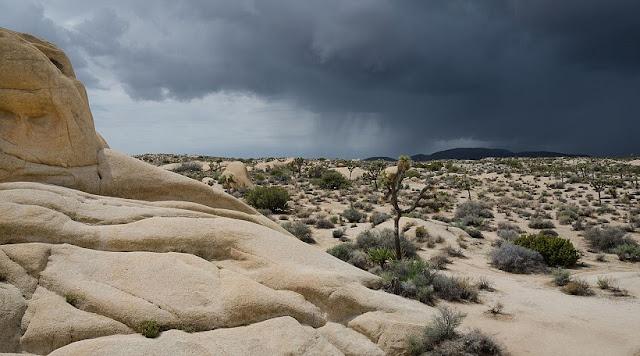 Parque Nacional Joshua Tree em Palm Springs