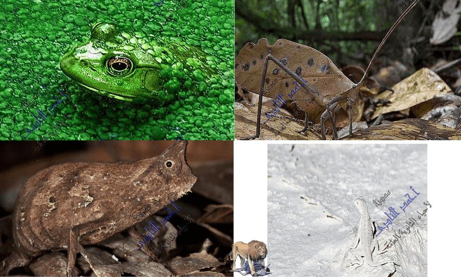 آليات دفاع الكائنات الحية عن نفسها - تغيير لون الجسم بغرض التمويه