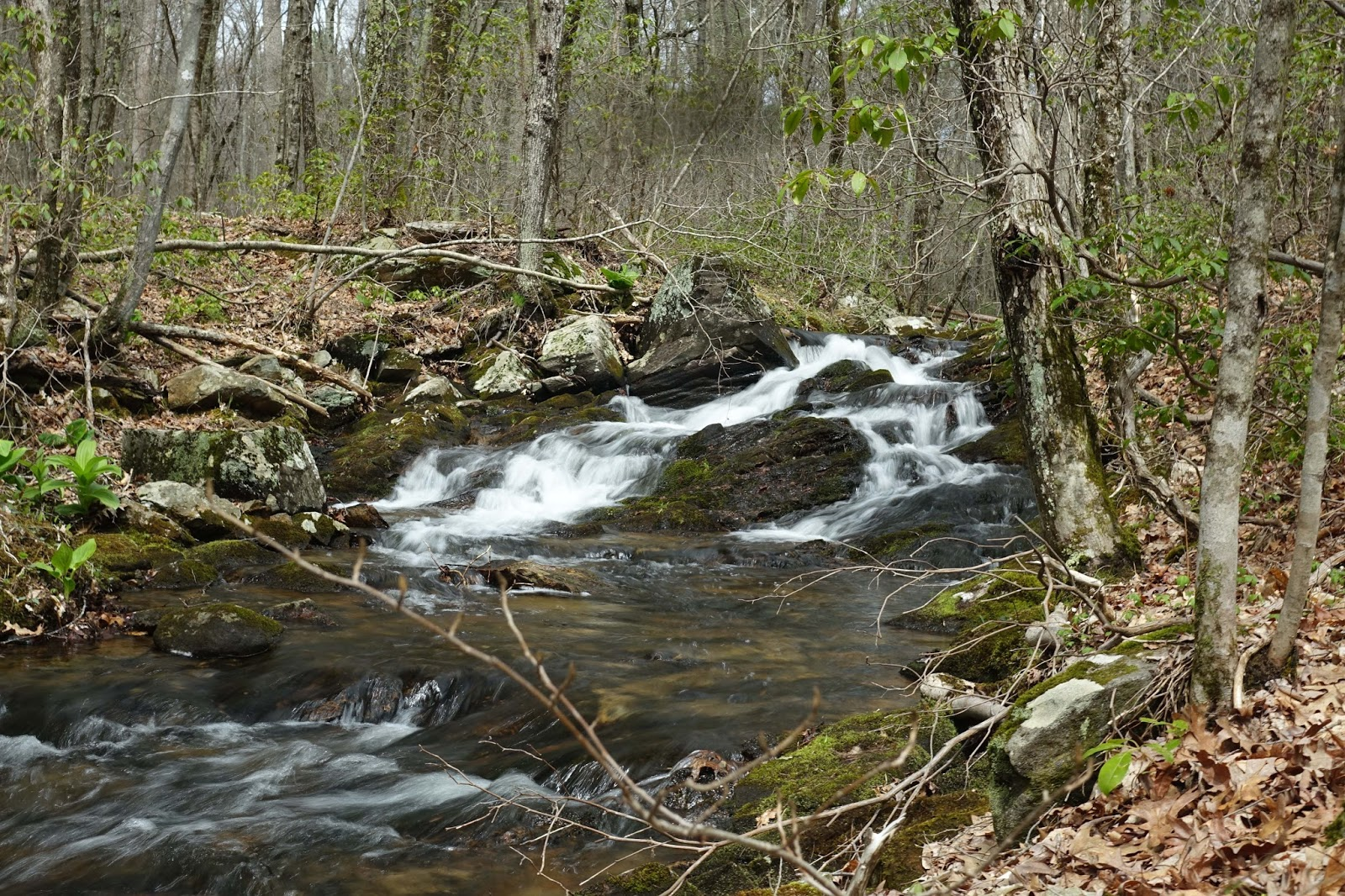 Fishing small streams for Fish and stream