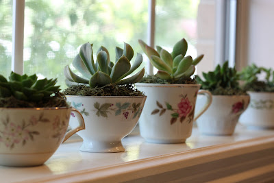 Image result for teacup succulents