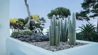 Diseño con plantas suculentas: Jardín de Anthony Paul en Cap d'Antibes