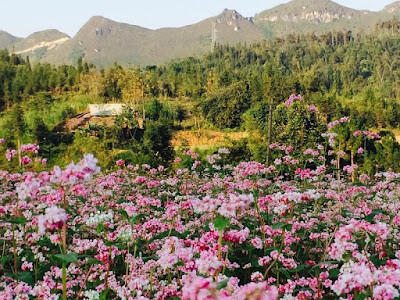 Buckwheat Flower Festival in Ha Giang 2017 officially opened ceremony