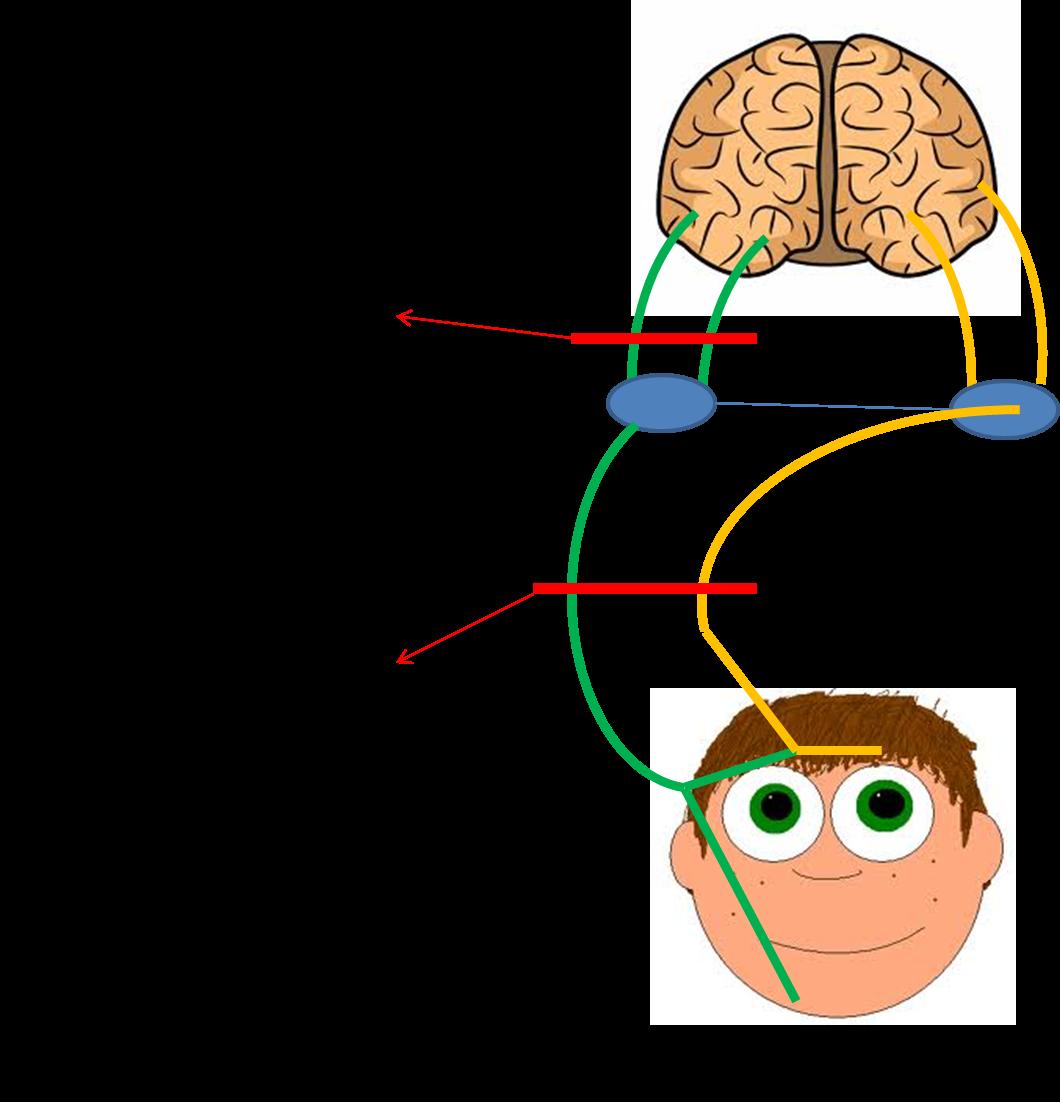 Facial Lesion 121