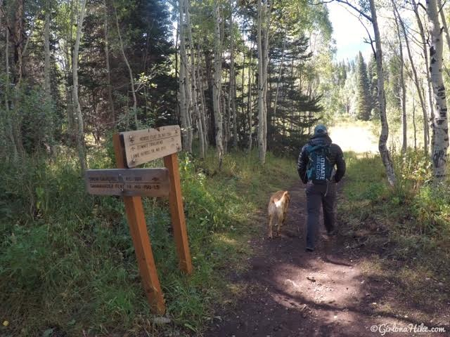 Hiking the Horse Flat Trail, American Fork Canyon