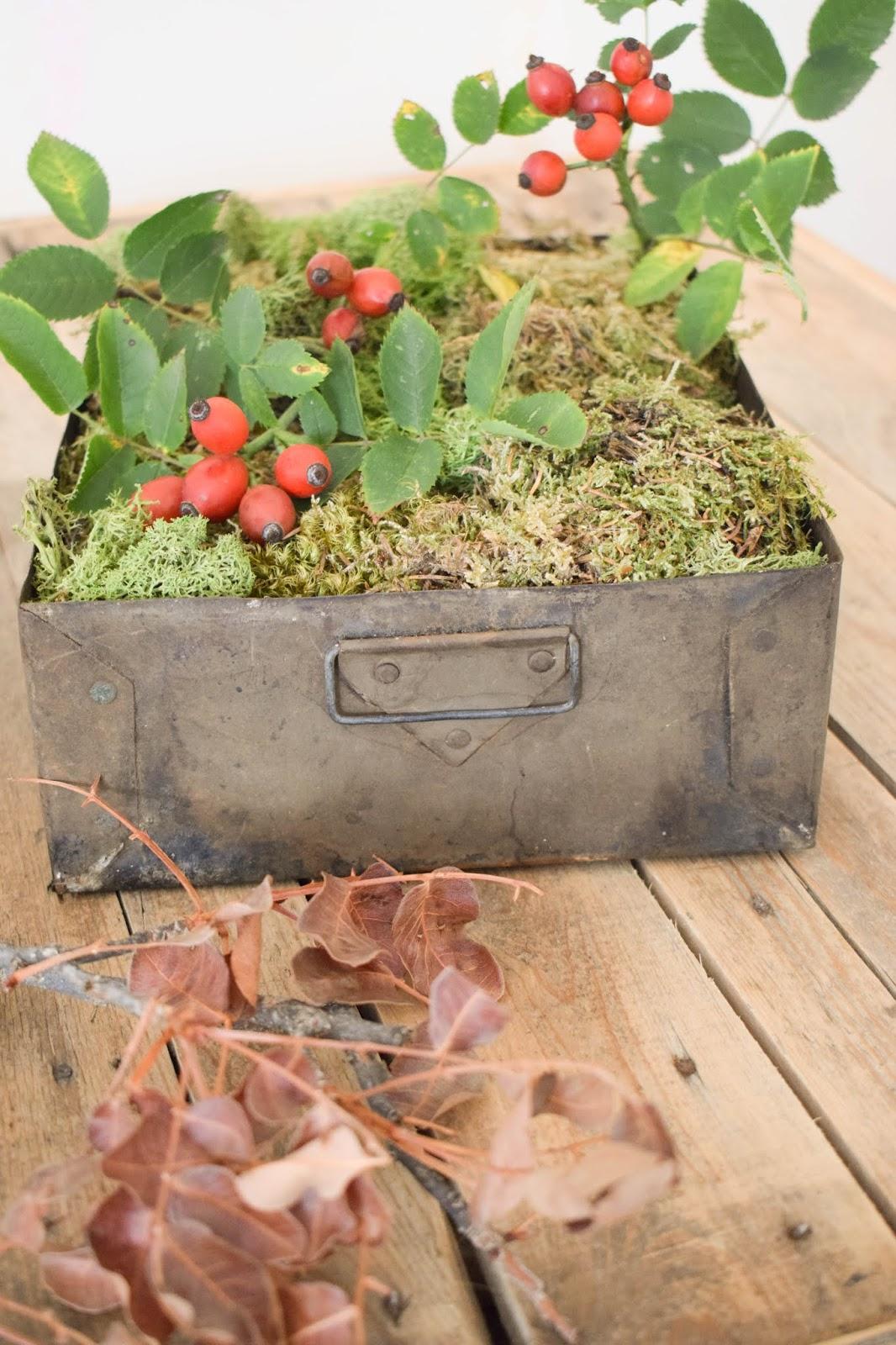 Herbstliche Deko für den Tisch, Sideboard und Konsole. Dekoidee mit Moos, Hagebutte 6
