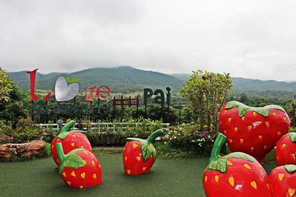 [Chia sẻ] Khám phá du lịch Love Strawberry Pai, Pai, Thái Lan