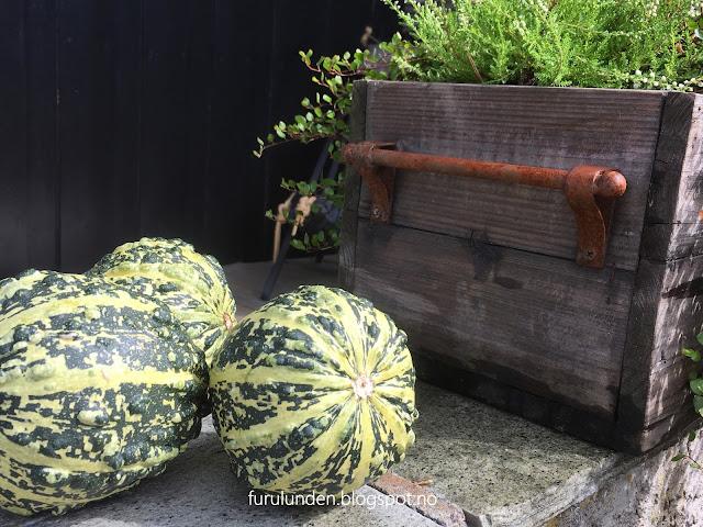 Inspirasjon til høstplanter i krukker - del 2 Furulunden