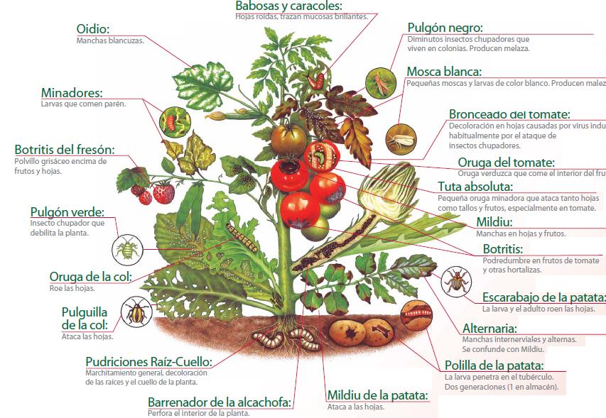que es una enfermedad en las plantas