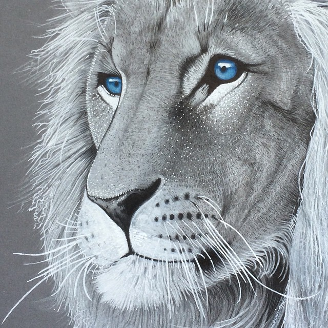 13-Lion-detail-Simon-Balzat-Colored-Pencils-make-Beautiful-Drawings-www-designstack-co