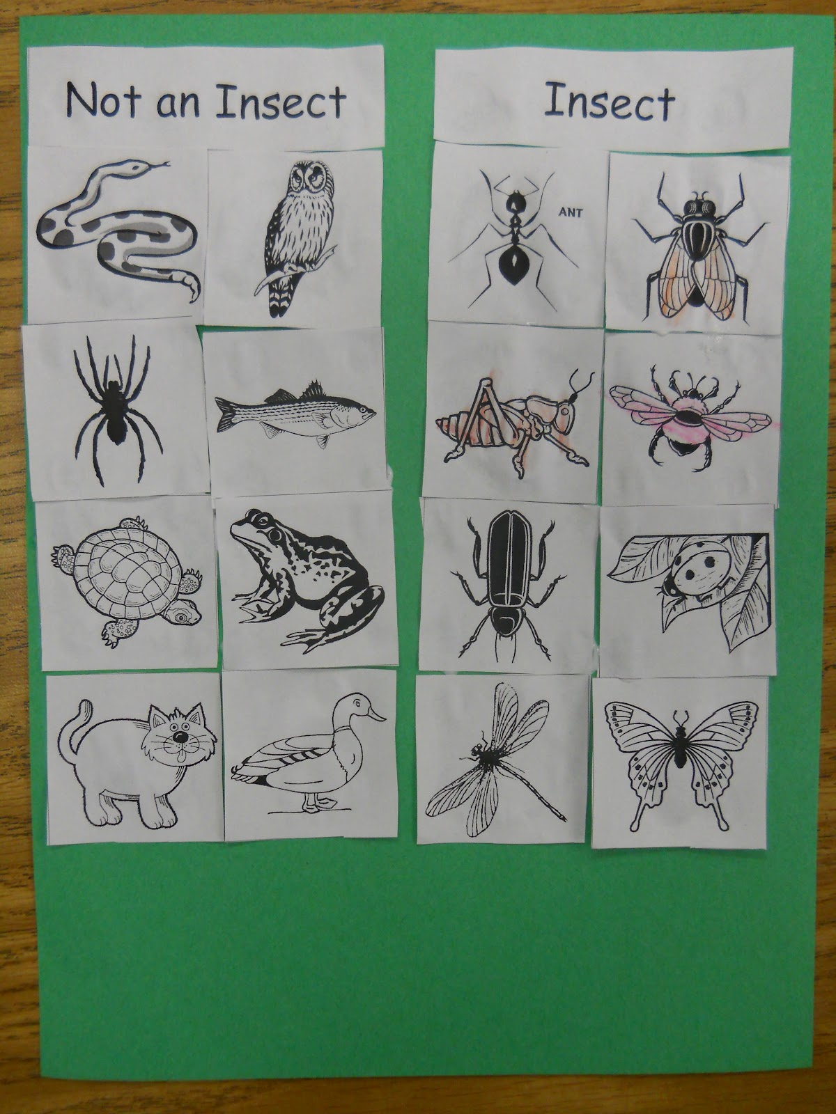 Mrs T S First Grade Class Old Black Fly