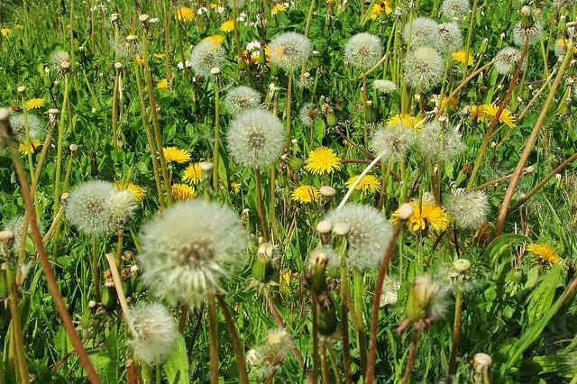 5 способов борьбы с аллергией весной.