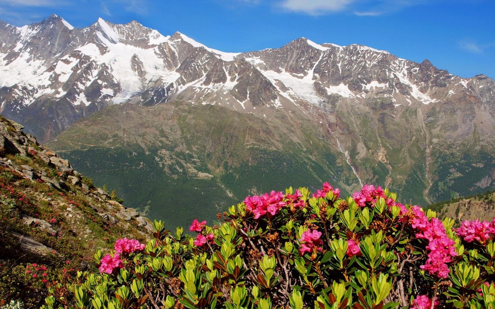 Fond ecran printemps montagne fonds d 39 cran hd for Foto fond ecran